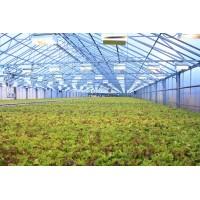 Технология выращивания салата на капилярном мате