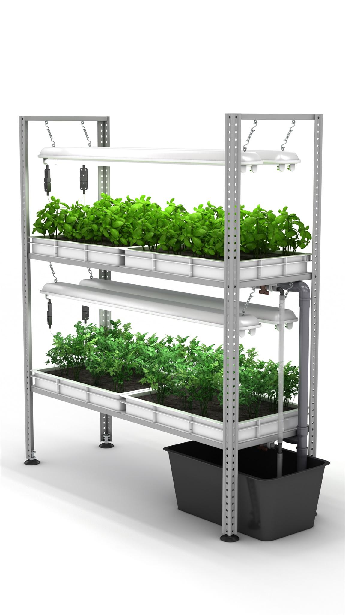 Выращивание зелени на продажу в домашних условиях как 85