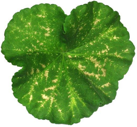 органоминеральное удобрение картофельное инструкция