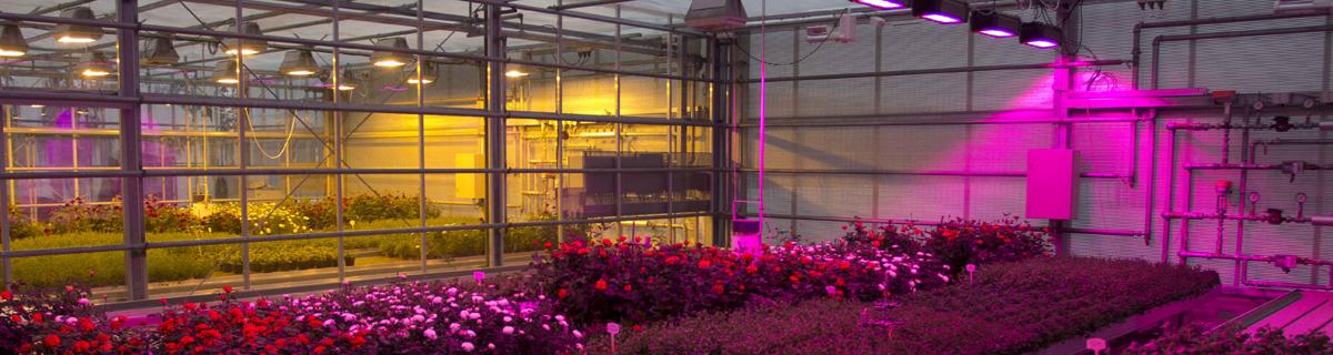 Картинки по запросу искусственное освещение растений светодиодами