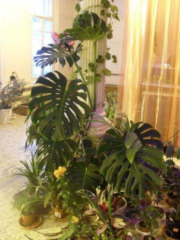 Выращивание цветов на гидропонике
