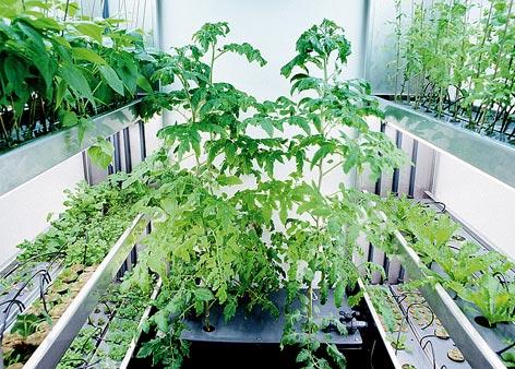 home-hydroponics