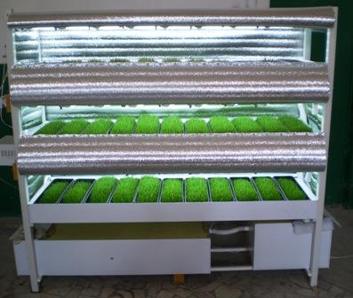 Установка для выращивания зелени своими руками