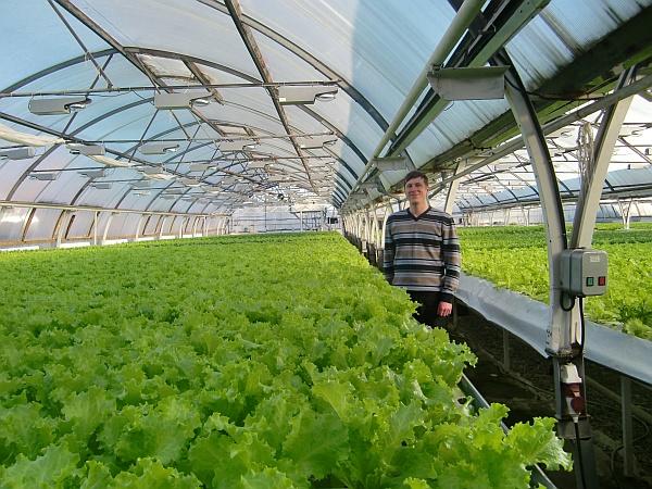Выращивание салат на гидропонике 533